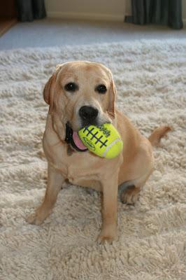 American football pup-star