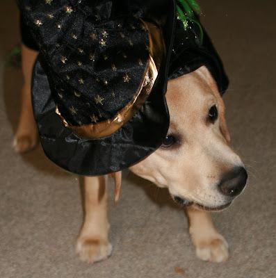 Halloween warlock pup