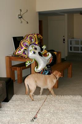 Halloween balloons puppy fun