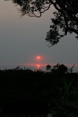 Santa Monica sunset through the trees