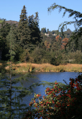 View of Reservoir in Franklin Canyon Park