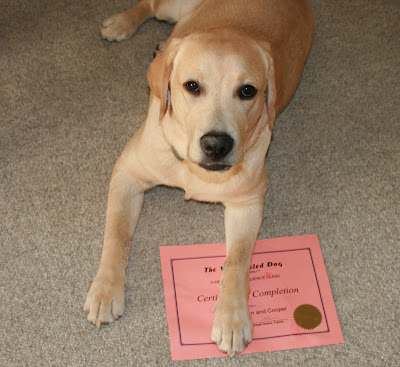 Cooper's obedience class certificate