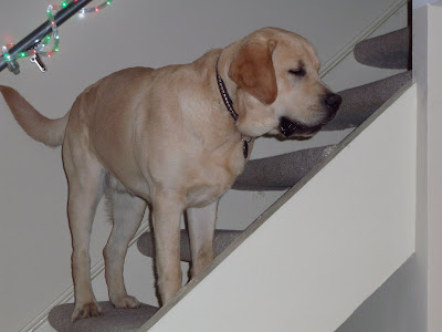 Cooper on the stairs