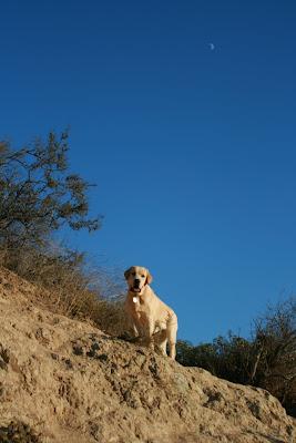 Runyon Canyon pup
