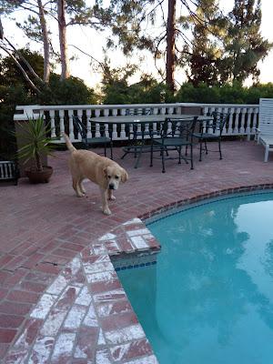 Cooper exploring poolside