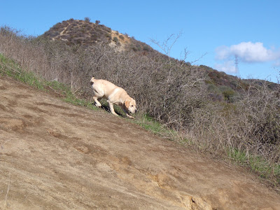 Runyon Canyon dog hike