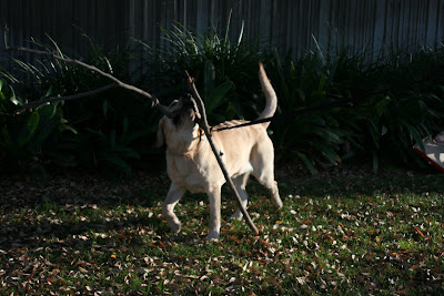 Stick fun for pup
