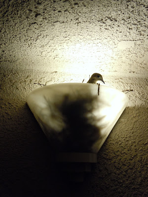 Light bird nest at night