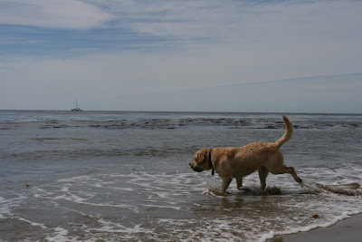 Surf pup at Hendry's Beach
