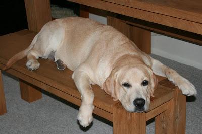 Bench pup Cooper