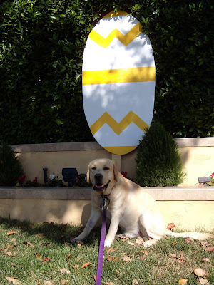 Happy Easter egg puppy