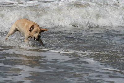 Arroyo Burro Dog Beach fun