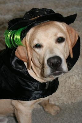 Not amused Halloween Cooper