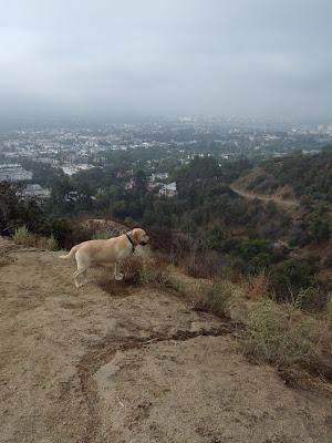LA after rain October 2009