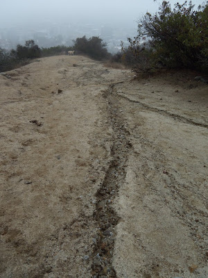 Runyon Canyon trail after rain Oct 09