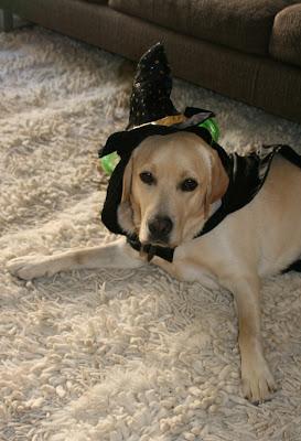Wicked Halloween wizard pup