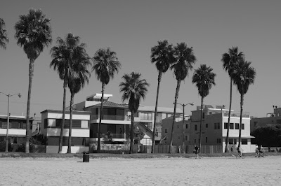 Venice Beach palms in mono