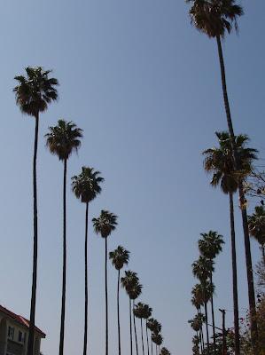 LA palm skyline