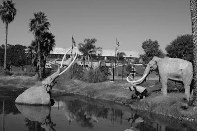 La Brea Tar Pit mammoths in mono