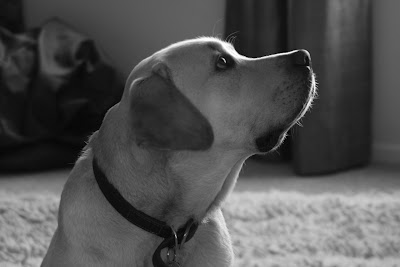 Cooper hopeful pup profile in mono