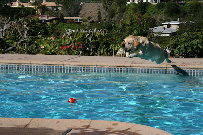 Diving pool Labrador