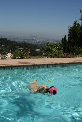 Swimming pool Downtown LA view