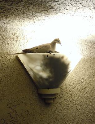 Bird's nest mum and baby