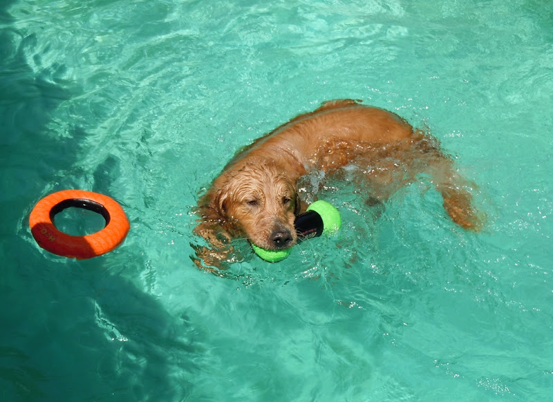Jackson pool retriever
