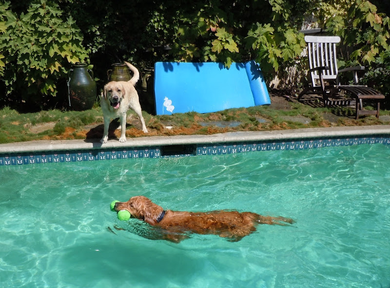Pup swimming lessons