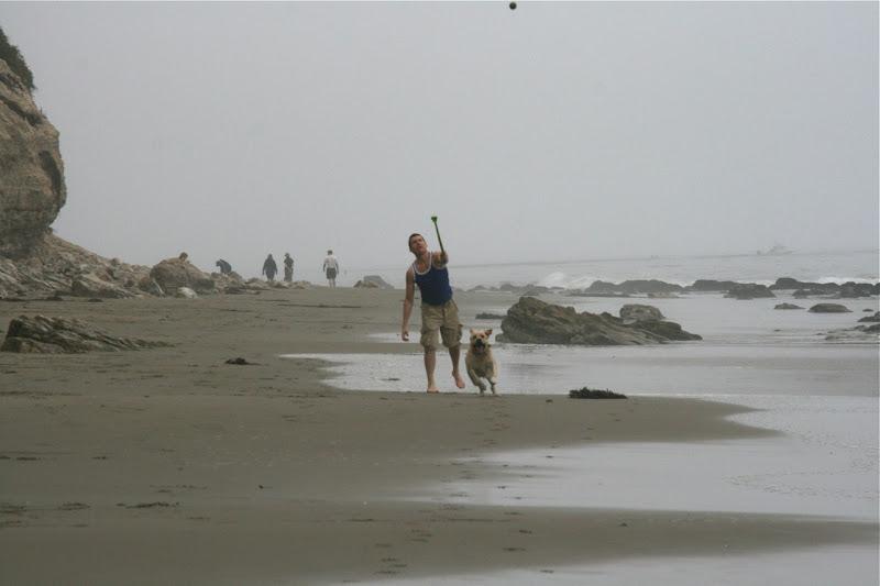 Cooper chasing ball Hendry's Beach