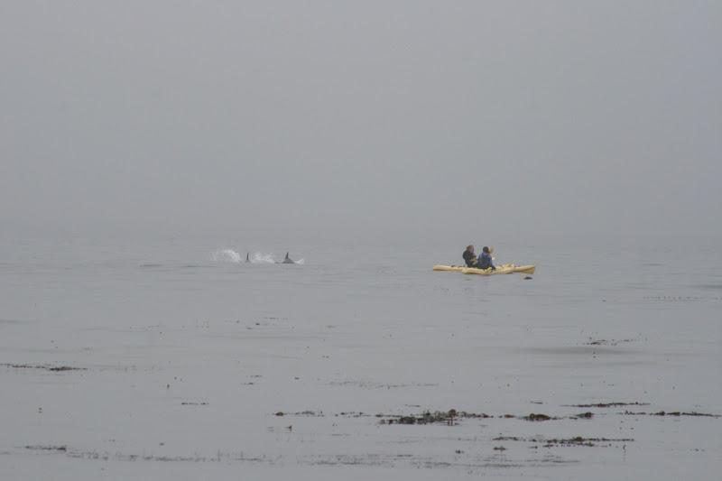 """""""Kayaks"""