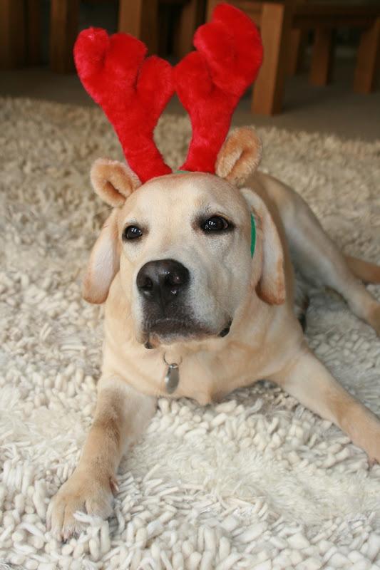 Christmas pup Cooper Dec 08