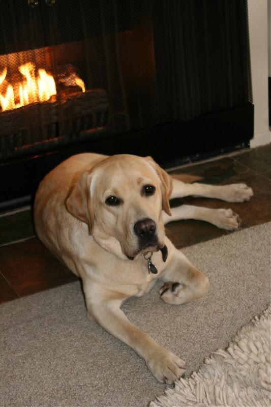 Fireside Labrador Cooper Nov 09