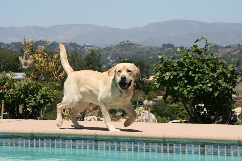 Swimming Pool Cooper
