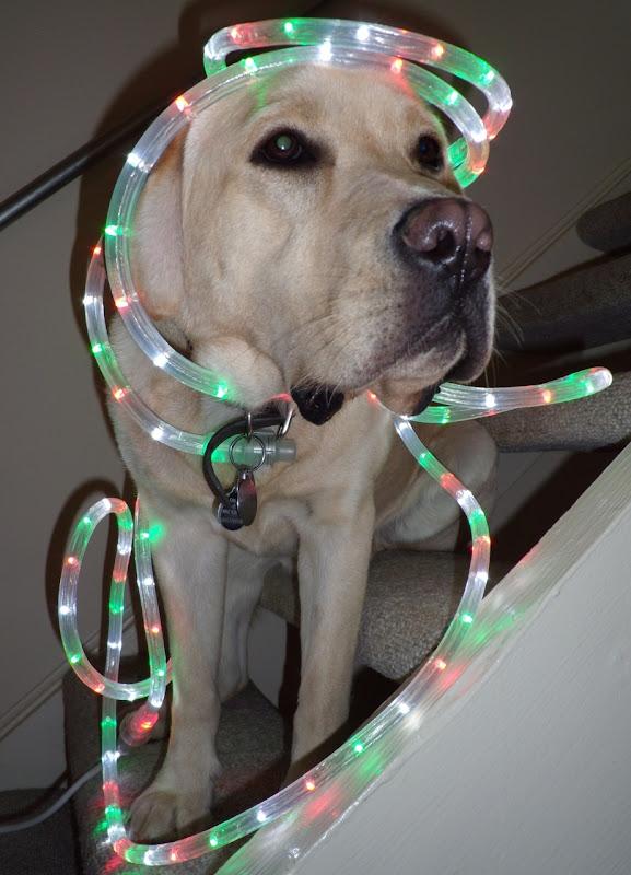 Christmas lights Cooper