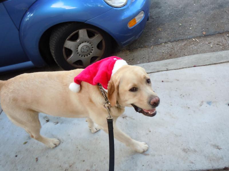 Festive Christmas dog walk