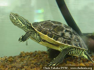 PETS: Types of Turtles