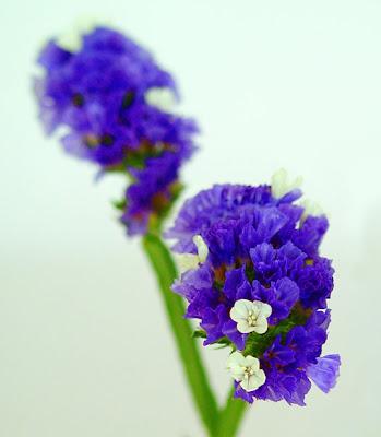 Imagenes De Flores De Ornato - El narciso, una flor de leyenda Plantas facilisimo com