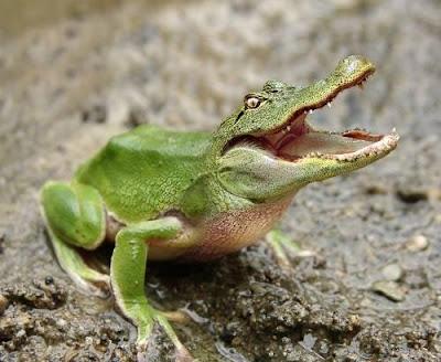 صور حيوانات غريبه جدااااااااااااااااااااااا