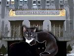 ASTOR CATS