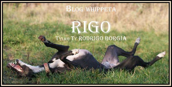Blog whippeta Rigo