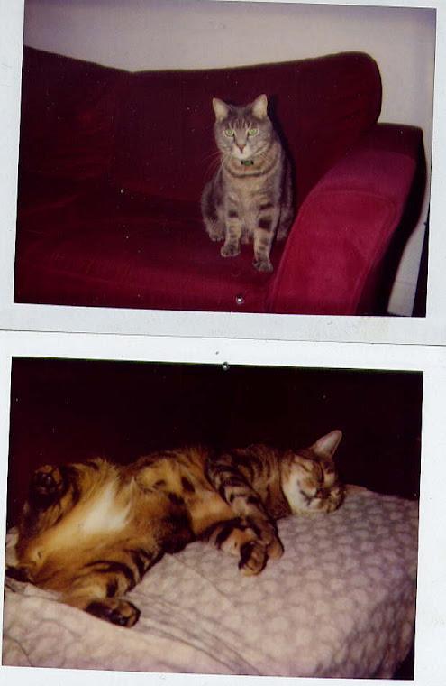 mes deux Lions Léo Bile