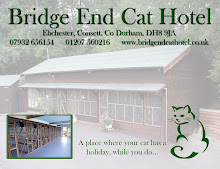 Bridge End Cat Hotel