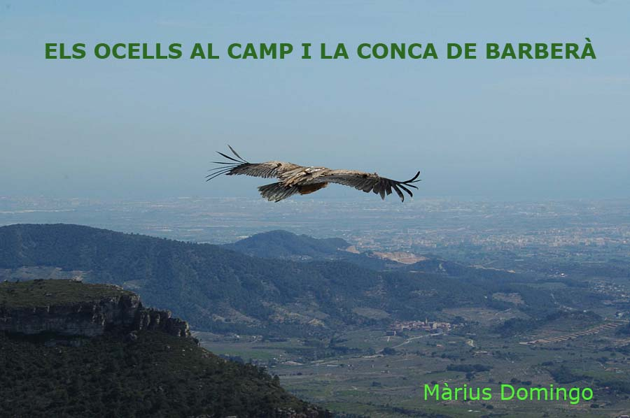 Ocells del Camp i la Conca de Barber.