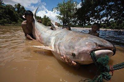 ... sungai utama di dunia banyak menyimpan berbagai jen