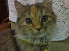Ashie - Queenie Cat