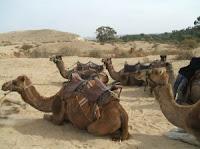 chamelle Dubai
