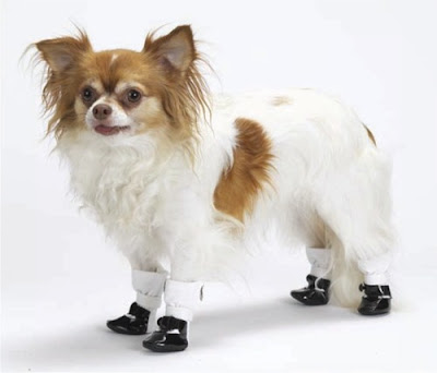 May Janes for dogs