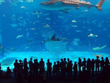 manila ocean park