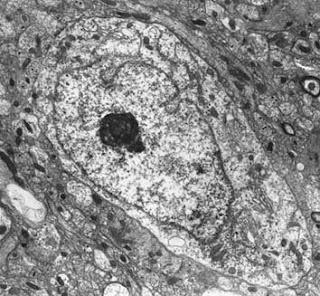 Micrografia electrònica d'una cèl·lula eucariota.